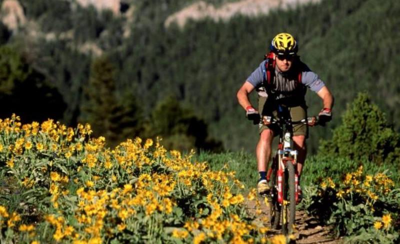 в поле велосипедист