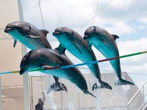 Дельфинарий «Коктебель» - незабываемое шоу и яркие эмоции